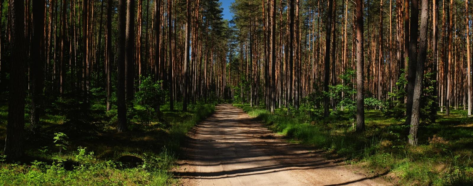 hydra trail